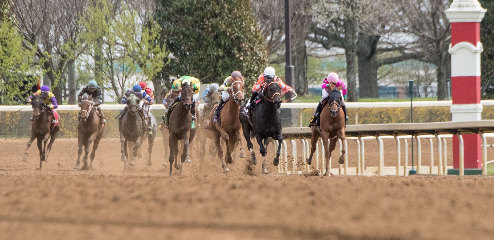 With the Breeder's Cup Championships fast approaching, G1 races are scarce.  So this week I found a race that offers a huge field and the chance for long odds.