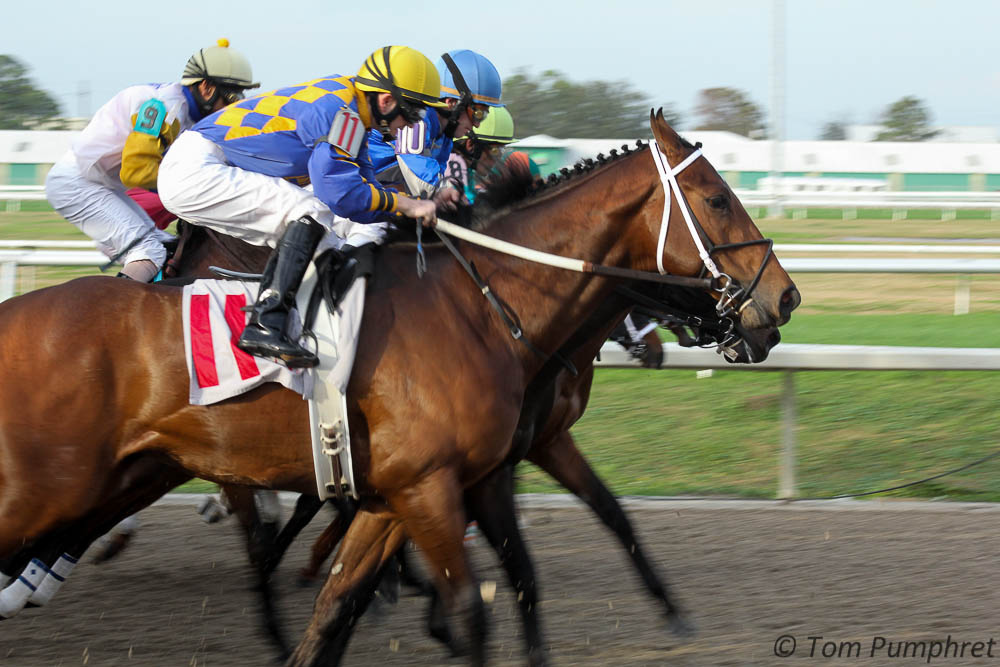 The derby trail makes its first major stop this week.  The G2 $1M Louisiana Derby will offer 100-40-20-10 derby points to the top 4 finishers, which should be…
