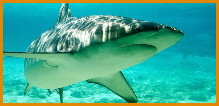 Shark tank poker show