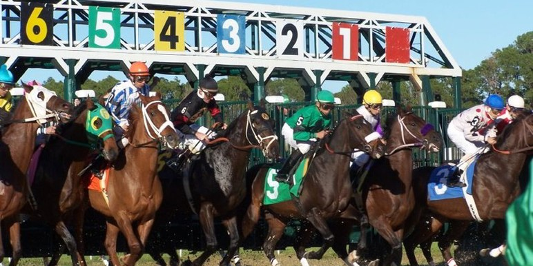 The next stop along the Derby trail will be Tampa Bay Downs which will host the Grade 2, $350,000 Tampa Bay Derby. Ten 3-yr old hopefuls will enter the gate…